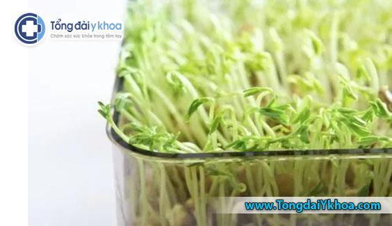 Rau mầm thường được tiêu thụ thô hoặc chỉ nấu chín một chút. Dẫn đến nguy cơ ngộ độc cao