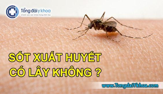 sốt xuất huyết có lây không sốt dengue fever
