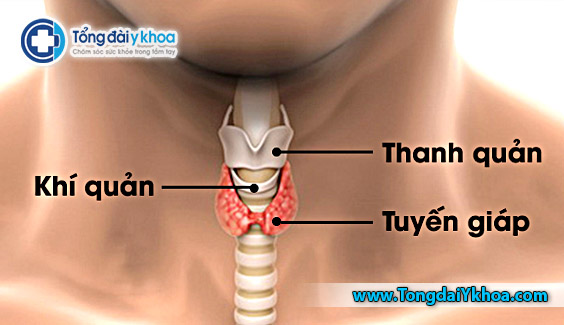 vi tri cua tuyen giap trong co the con nguoi thyroid