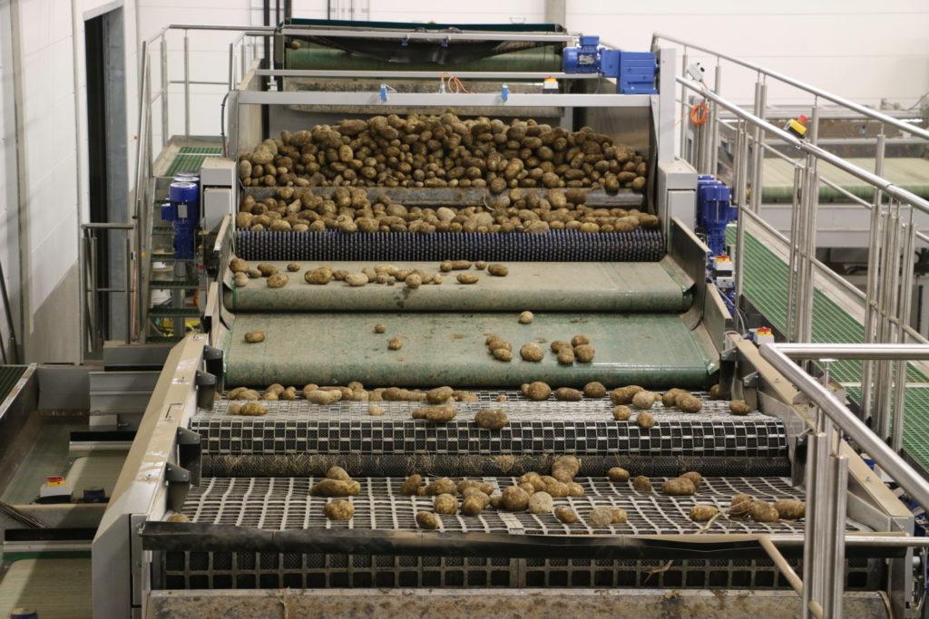 Potato Grading Potato Processing Machine Tong Engineering