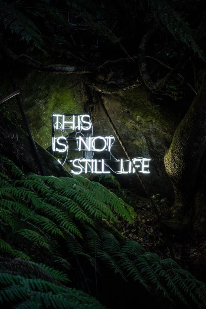 this is not still life neon light