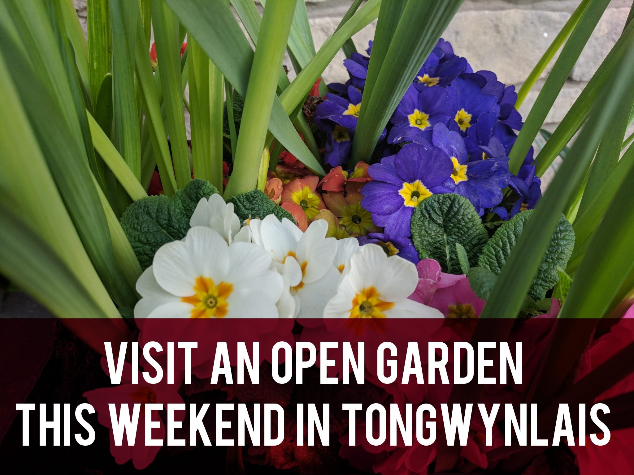 Visit an open garden this weekend in Tongwynlais header