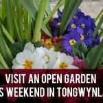 Visit an open garden this weekend in Tongwynlais header
