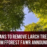 Plans to remove larch trees header
