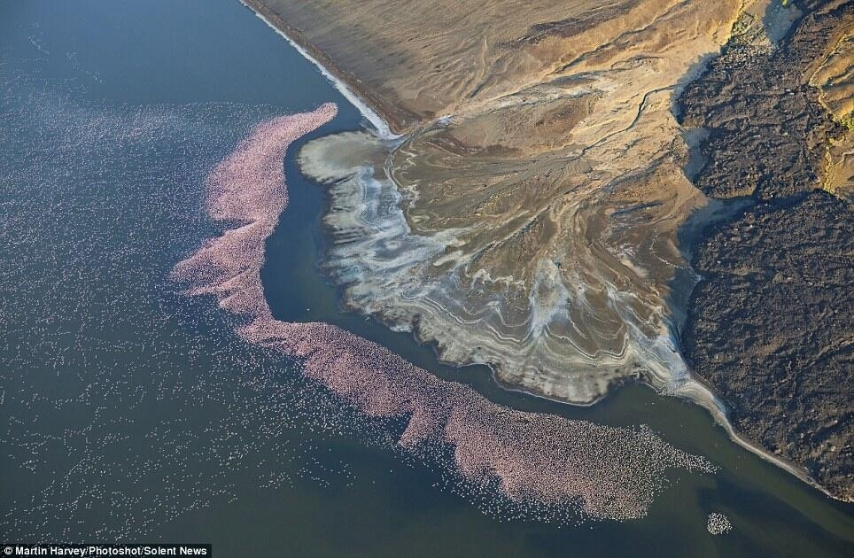 flamingoes-lake-bogoria-kenya