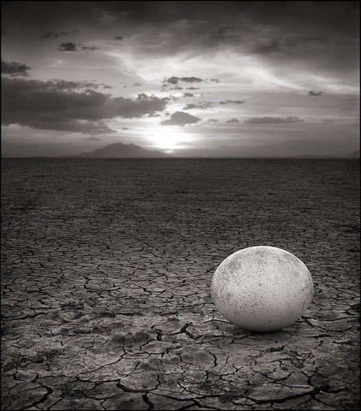 Nick_Brandt_abandonned_ostrich_egg