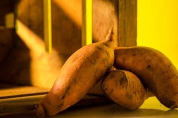 Konische Süßkartoffeln