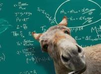 8653-new-math-teacher