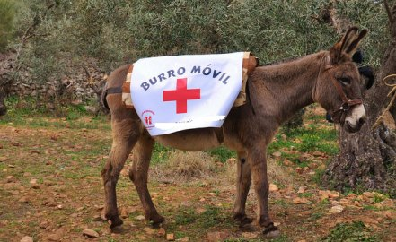 Big data sanitario: superando el burro-móvil