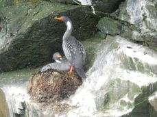 Im Nationalpark: Pingüino de Humboldt National Reserve