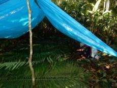"""Camping im Dschungel. Rundherum offen, unten einige Schichten Blätter """"damit die Schlangen nicht durchkommen"""". In der Nacht Starkregen."""