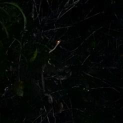 Während des Tages: Schwimmen im Amazonas. In der Nacht: Suche an der gleichen Stelle nach giftigen Schlangen - und finden sie!!!