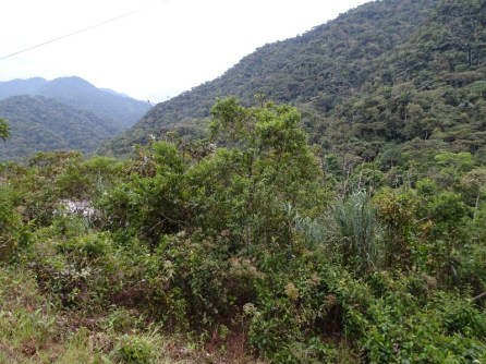 Im Regenwald: viel Wald und viel Regen