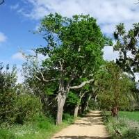 Camino por Osorio 3