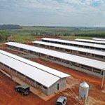 Làm mái cho trang trại nuôi heo - Tôn Kháng Ăn Mòn PVC
