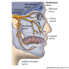 Trigeminal Nerve Diagram Nitrous Express Wiring Ear Pain After Tonsillectomy