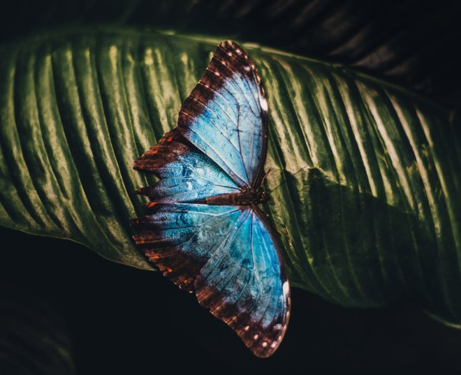 blue butterfly representing hashimoto's symptoms