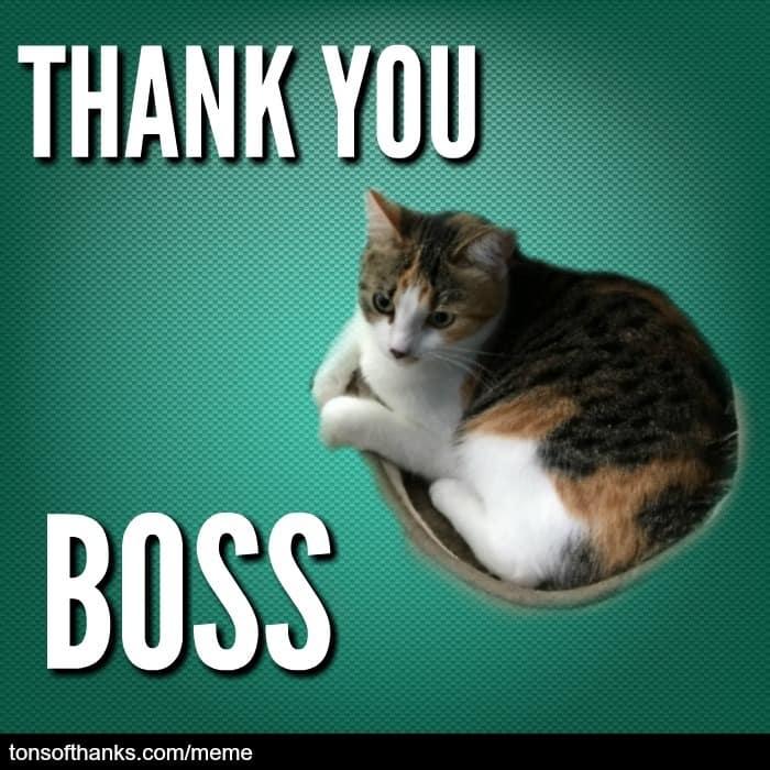 thank you boss cat meme