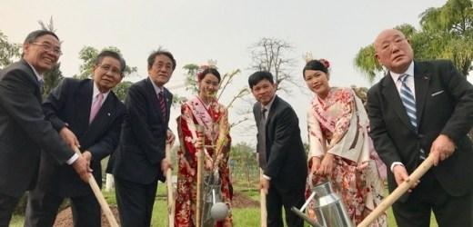 Đại sứ quán Nhật Bản trao tặng 172 cây hoa anh đào cho Hà Nội