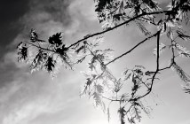 branches-backlight