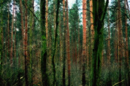 forest-wood-nature