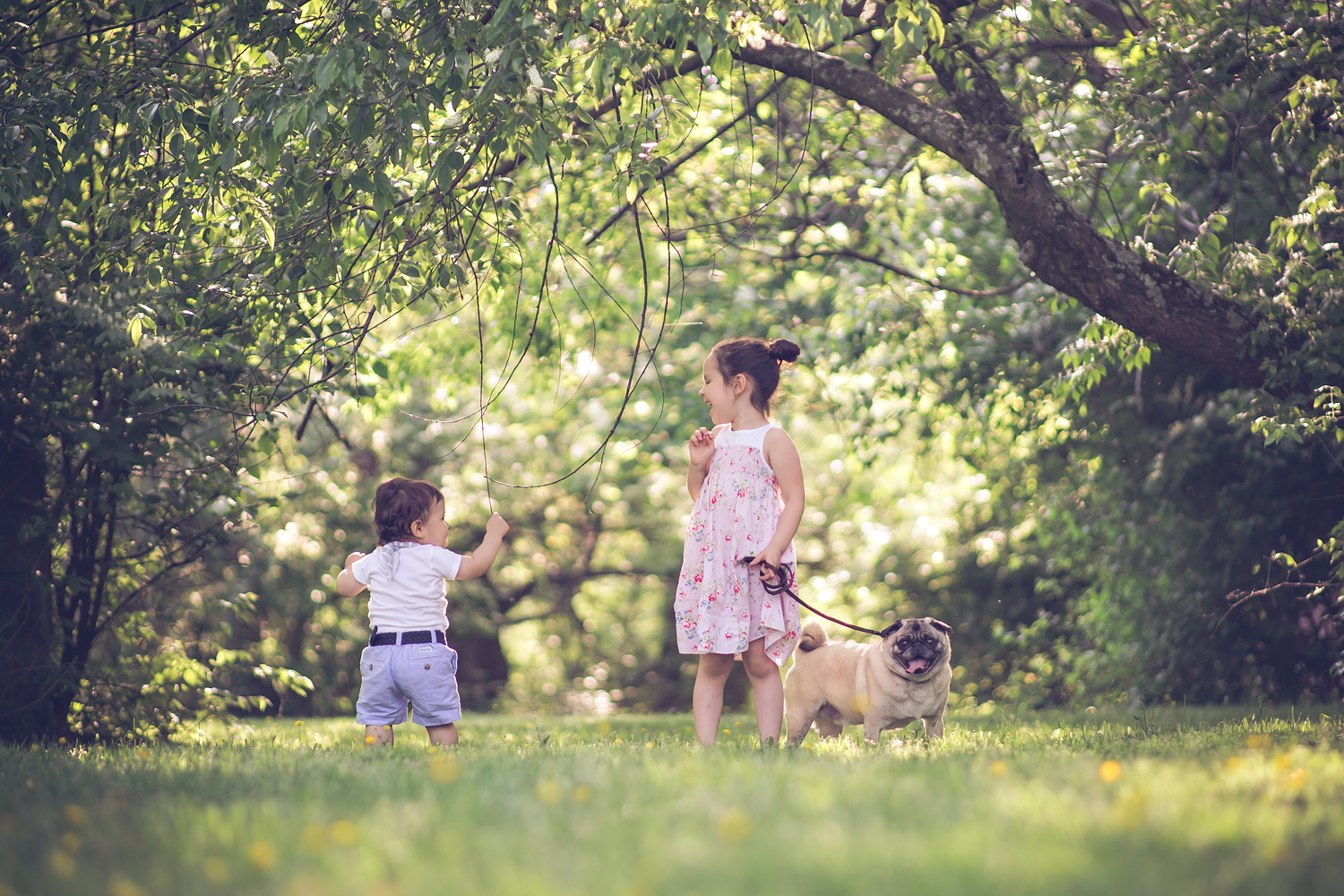 baby with pet pug dog   Tonya Teran Photography - Rockville, MD Newborn Baby and Family Photography