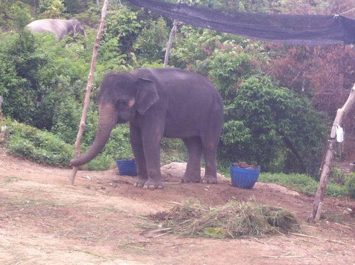 Elefante justo al lado de la carretera