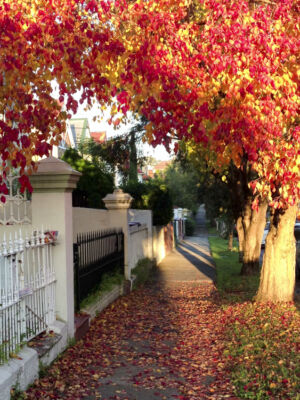 Autumn, Albany Rd, Stanmore