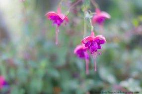 Maries Garden Santa Cruz wedding venue - flowers (14 of 32)