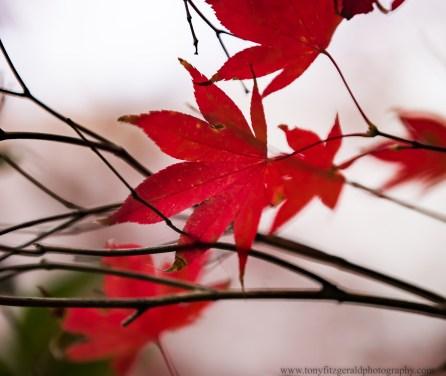 leaves (1 of 1)