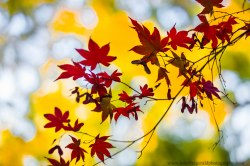 leaves (13 of 18)