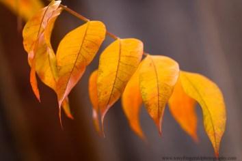 leaves (2 of 18)
