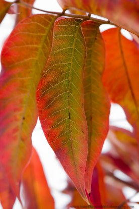 leaves (6 of 18)