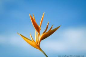 Maui flowers (3 of 12)