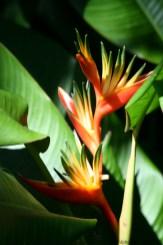 Maui flowers (8 of 12)