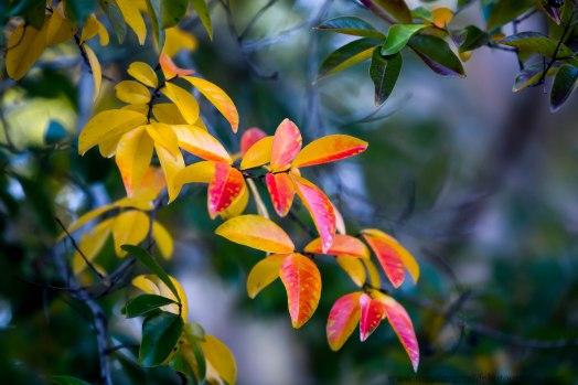 leaves (10 of 18)