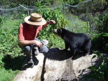 Mark was one of those volunteers. As a vet, he had a lot of skills to offer, and developed a particularly close relationship with Osita, our largest Andean Spectacled Bear.