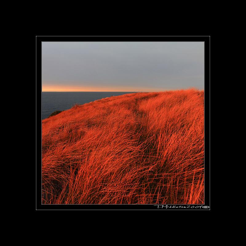 coastal-grass-isq