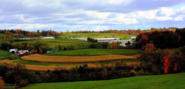 Farm Tonyparsley Ohionature
