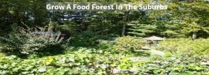 Food Forest In Suburb