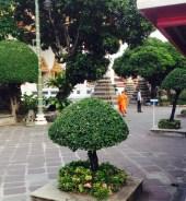 Buddha Monks Thailand Solo Trip