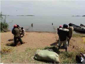 Fishers pulling beach seine
