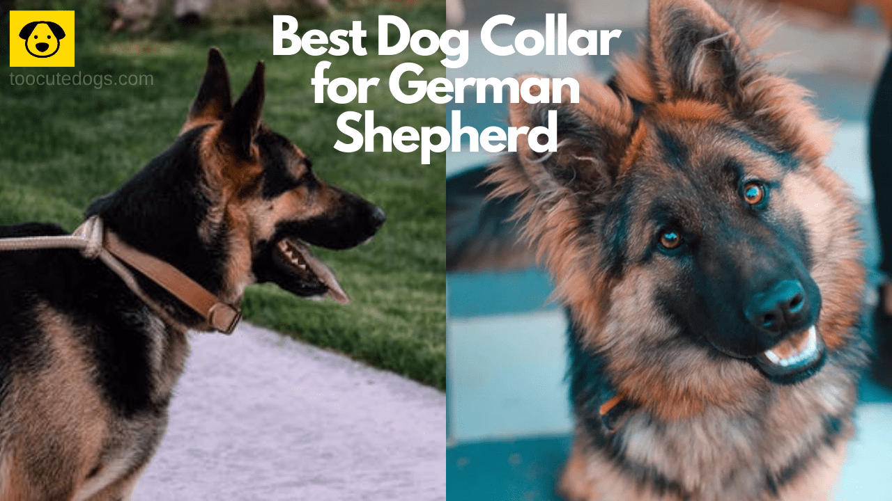 Best Dog Collar for German Shepherd