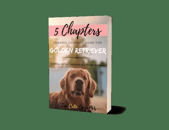 5 Chapter Guide For Golden Retriever
