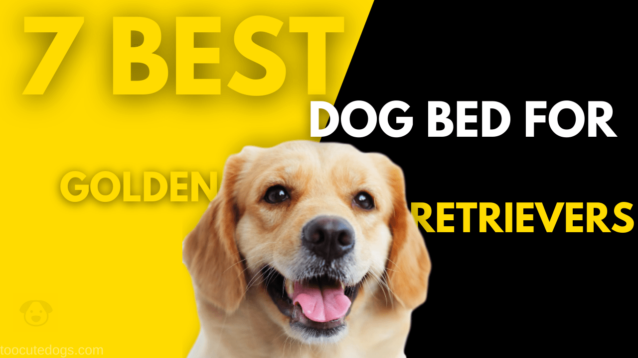 best dog bed for golden retrievers