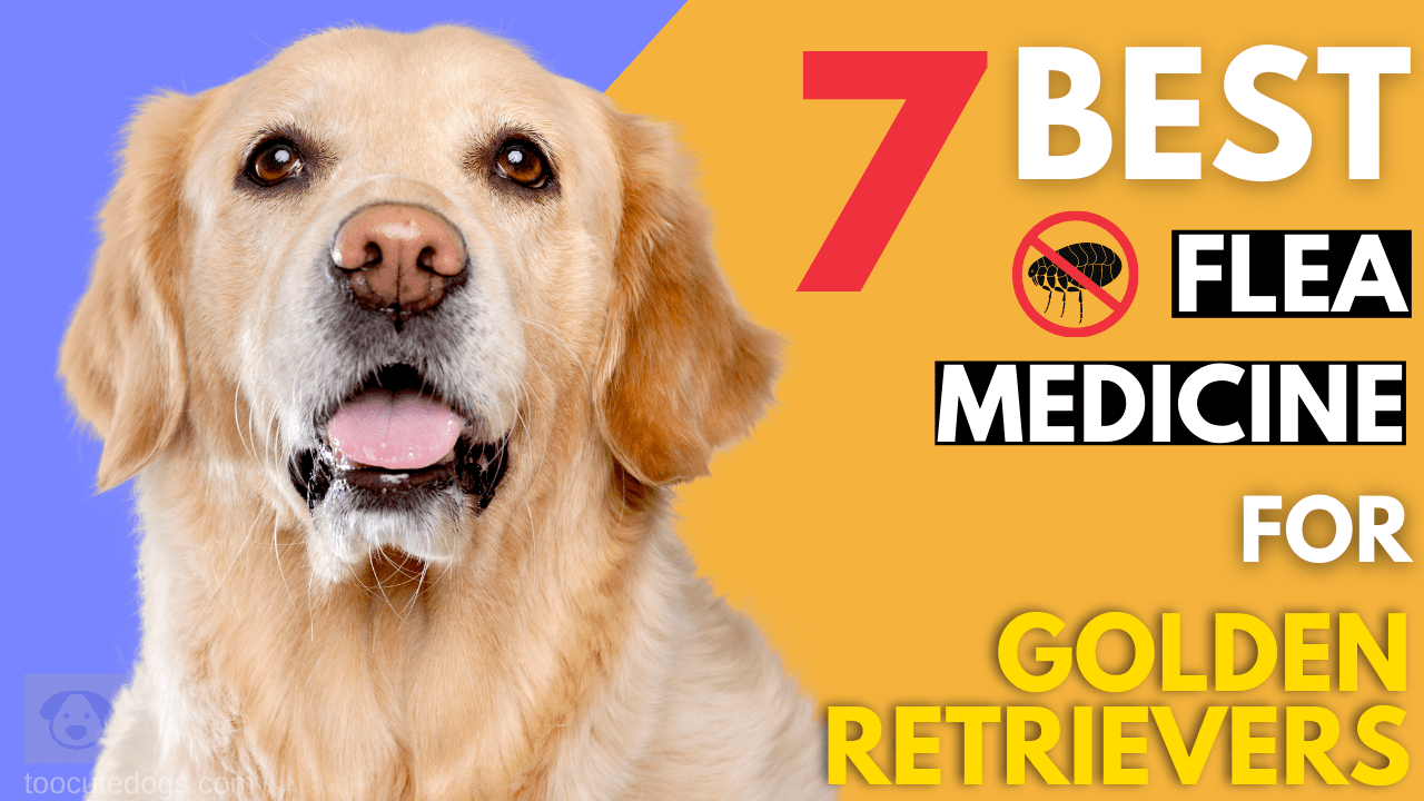 Best Flea Medicine For Golden Retrievers