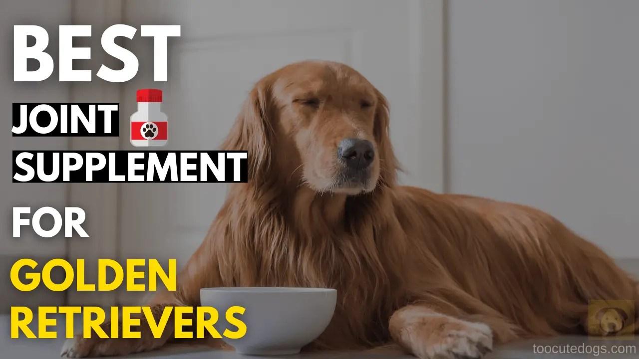 Best Joint Supplement For Golden Retrievers