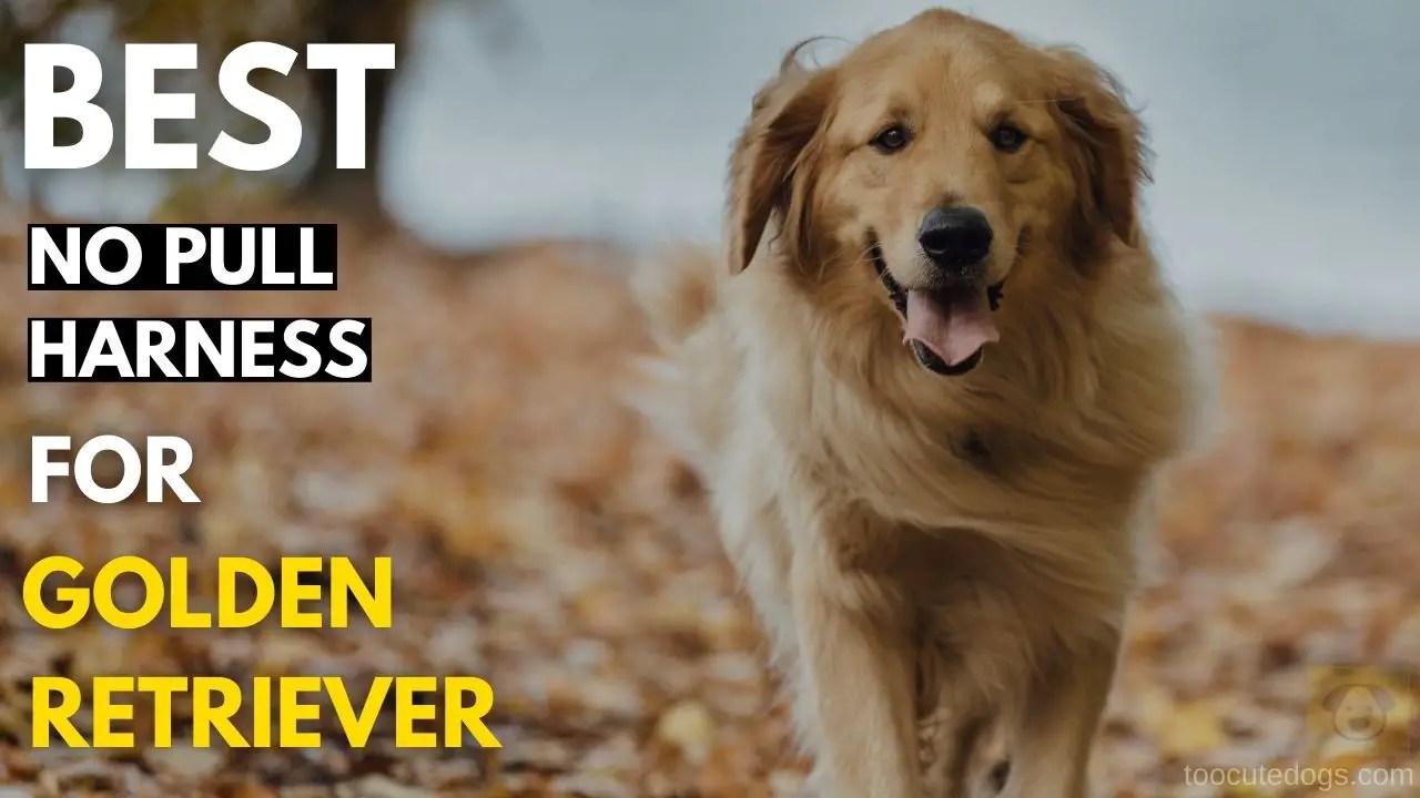 Best No Pull Harness For Golden Retriever