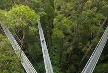 Photo of 'Canopy Walk' Terpanjang Di Dunia Terletak Di Utara Semenanjung Malaysia Rupanya!
