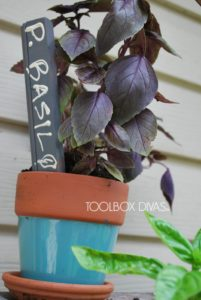 Purple Basil Marker